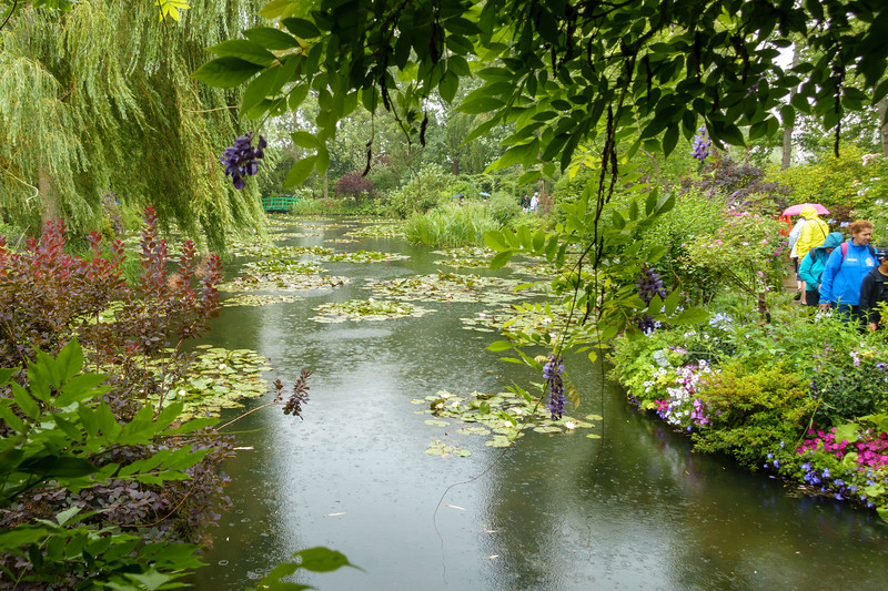 More rain on the lilly pond.
