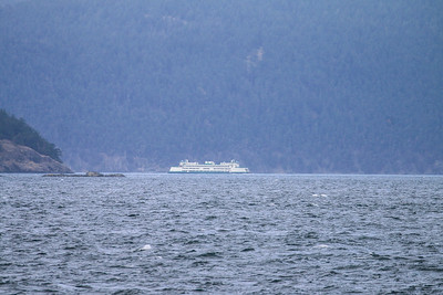 Pictures taken by Island Adventures Whale Watching