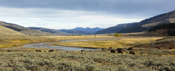 Lamar Valley, Yellowstone National Park, USA