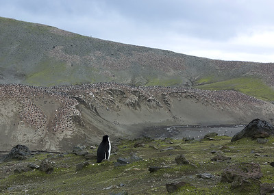 Penguin colony, Bailey's Point, Antartica.