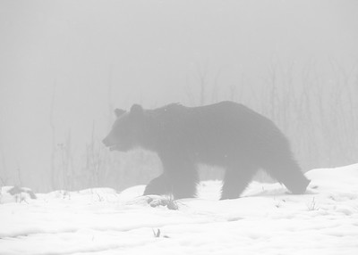Male in the mist
