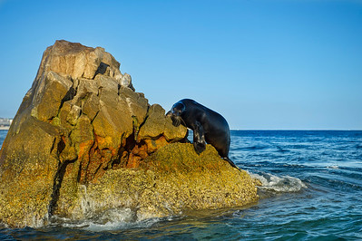 Late sun illuminates a seal and the most eastern point of land on the Baja Peninsula