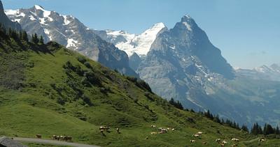 Grindelwald Pana JPG