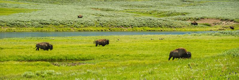 _DO36651C Yellowstone River 12x36 Panorama