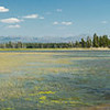 Lake yellowstone at Pelican Creek