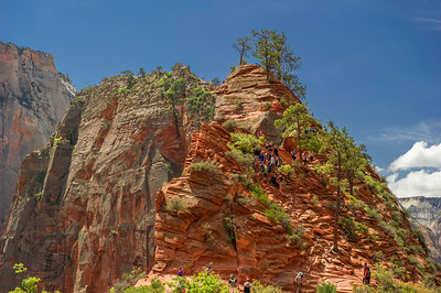 Among the mess, some just sit and watch the struggles to go up or down the Angels Landing trail.