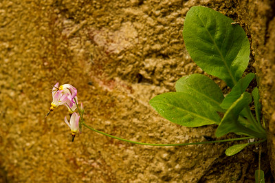 Shooting stars growing in a crack in the canyon wall along the Riverwalk.