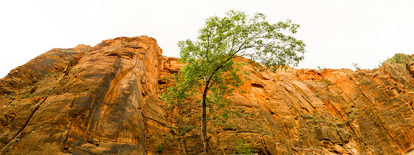 Cliff side in Zion