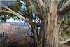 Grand Canyon South Rim-2208