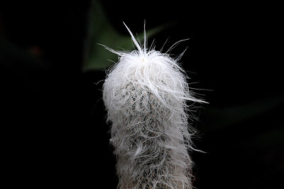 The Bernie Sanders Cactus