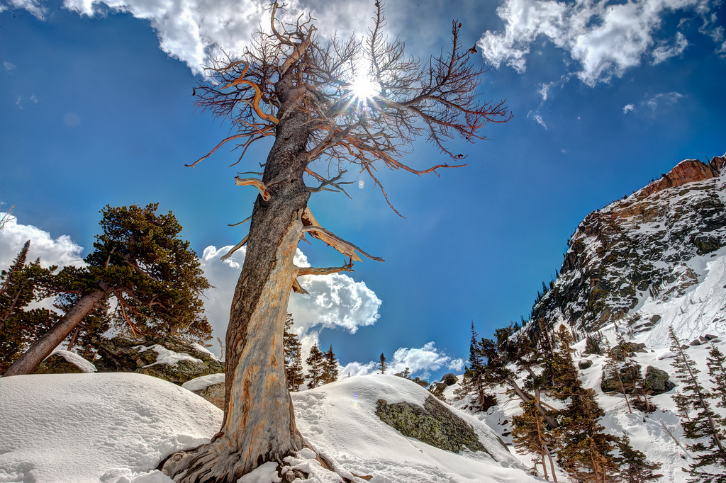 Dead Tree at Emerald Lake in Rocky Mountain National Park