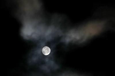 Moon Dove