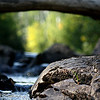 Upstream Towards Spring