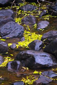 Birch Water