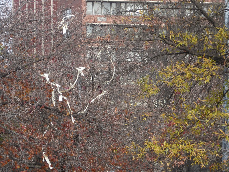 [yes, thank you for pointing out there is toilet paper in the tree; this is from a college campus (Univ. of Alabama at Birmingham), and if there is a tree on a campus, it WILL have toiler paper on it]