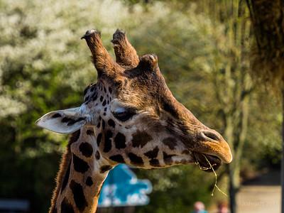 Olmense_Zoo_JC19943c_JD_OZO0417LE