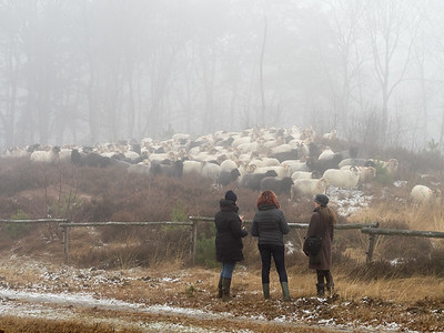 schapenwandeling_JC16631c_JD_KWA0117WI-2