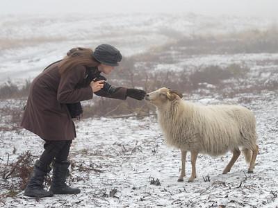 schapenwandeling_JC16668c_JD_KWA0117WI