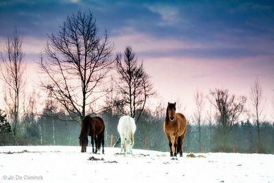 1301_Winter_013
