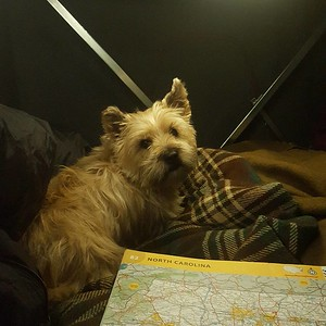 Last nights route planning.  #cairn #cairnterrier #terrier #dogsofinstagram #instadog #cairnsofinstagram #cairnterriersofinstagram #travel #wanderlust #instatravel #travelgram #traveling #explore #trip #adventure #travelling #travelphotography #neverstopexploring #wanderer #traveltheworld #lonelyplanet #tent #camping #camp #outdoors #campsite
