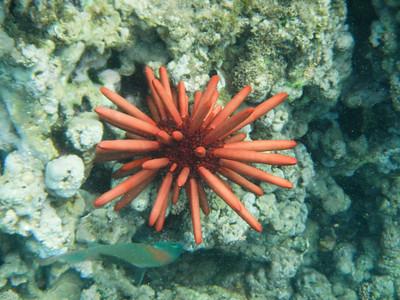 Underwater Maui-0973.jpg