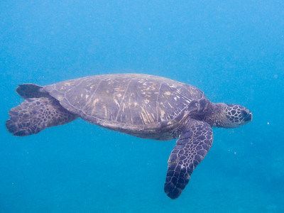 Underwater Maui-0962.jpg