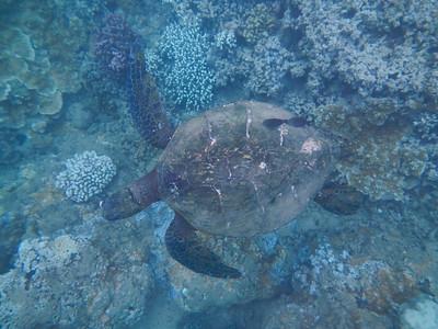 Underwater Maui-7.jpg