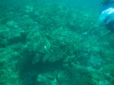 Underwater Maui-11.jpg