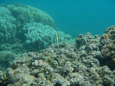 Underwater Maui-0976.jpg