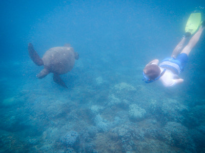 Underwater Maui-13.jpg