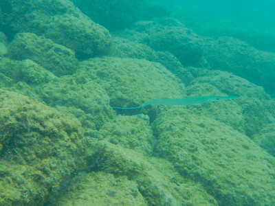 Underwater Maui-0952.jpg
