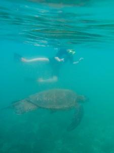 Underwater Maui-0917.jpg