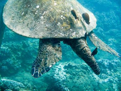 Underwater Maui-0974.jpg