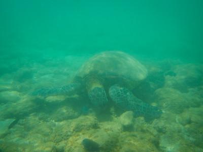 Underwater Maui-81.jpg