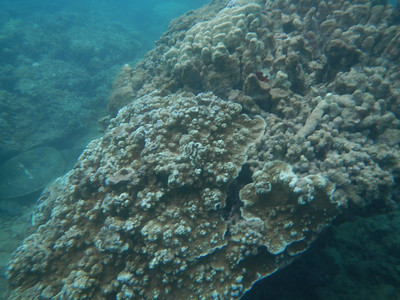 Underwater Maui-6.jpg