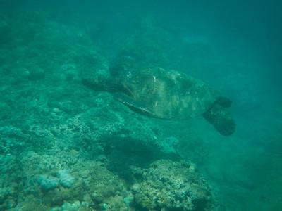 Underwater Maui-9.jpg