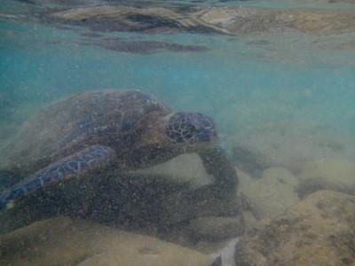 Underwater Maui-0920.jpg
