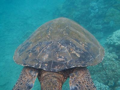 Underwater Maui-0955.jpg