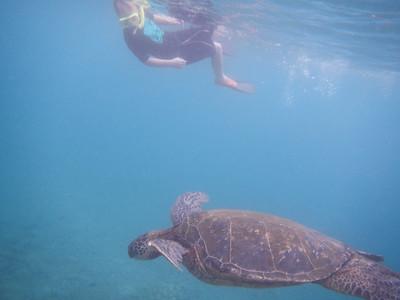 Underwater Maui-0909.jpg