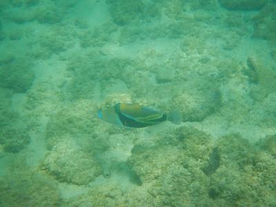 Underwater Maui-88.jpg