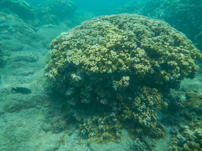 Underwater Maui-22.jpg