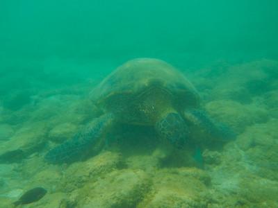 Underwater Maui-84.jpg