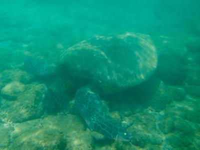 Underwater Maui-77.jpg