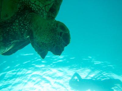 Underwater Maui-0959.jpg