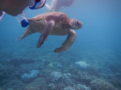 Underwater Maui-0904.jpg