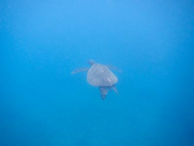 Underwater Maui-4.jpg