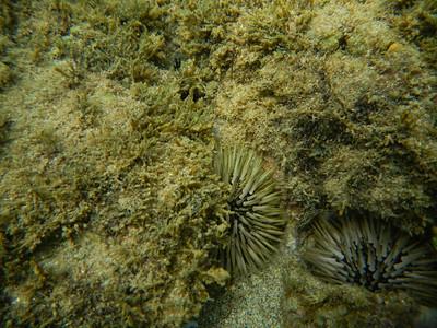 Underwater Maui-34.jpg
