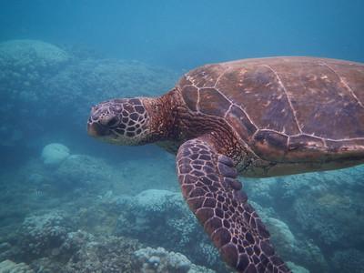 Underwater Maui-0958.jpg