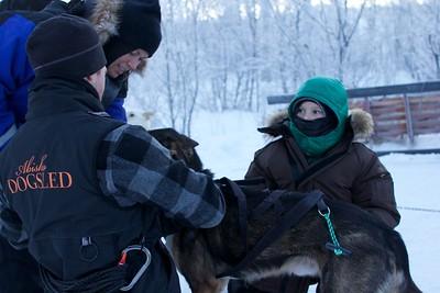 Abisko Dog Sledding 15