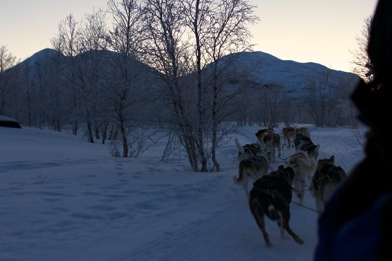 Abisko Dog Sledding 35